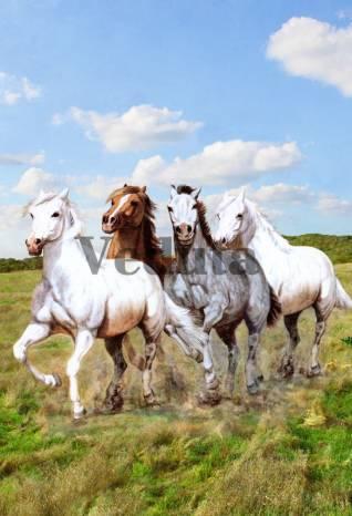 Фотообои, фреска Табун лошадей, арт. 4876