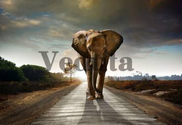 Фотообои, фреска Африканский слон, арт. ID10758