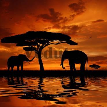 Фотообои, фреска Африканский закат, арт. ID10763
