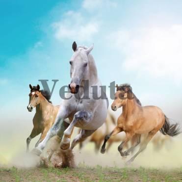 Фотообои, фреска Скачущие лошади, арт. ID12322
