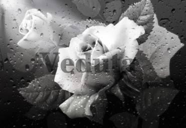 Фотообои, фреска Розы капли, арт. 7140