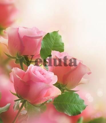 Фотообои, фреска Розовые бутоны, арт. 7211