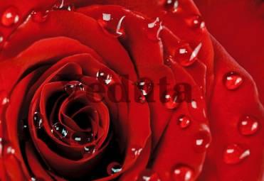 Фотообои, фреска Капли на лепестках красной розы, арт. ID12669