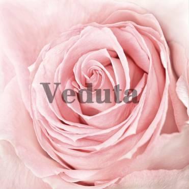 Фотообои, фреска Розовые лепестки, арт. ID12825