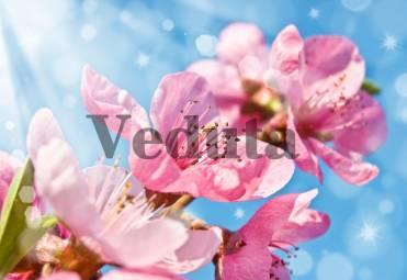 Фотообои, фреска Цветочки сакуры, арт. 7231