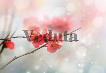 Фотообои, фреска Цветочки сакуры макросъемка, арт. ID11824