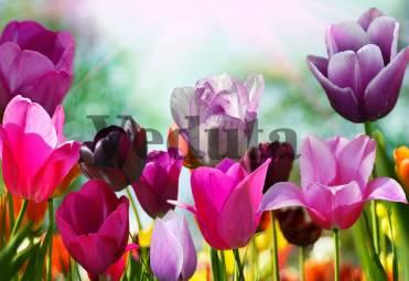 Фотообои, фреска Бутоны тюльпанов, арт. ID11620