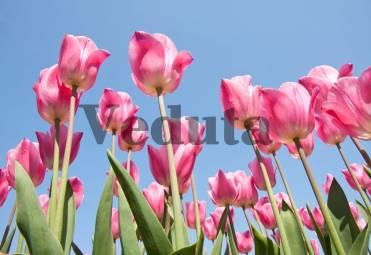 Фотообои, фреска Стебли тюльпанов, арт. ID12718