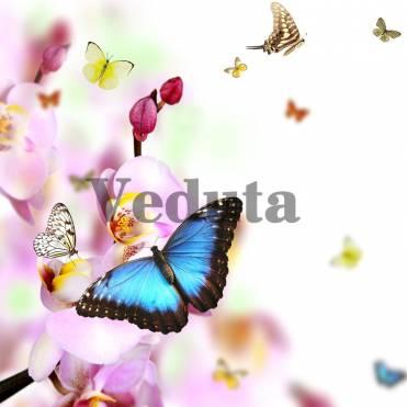 Фотообои, фреска Бабочка на цветах, арт. ID12727