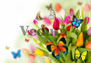 Фотообои, фреска Бабочки на тюльпанах, арт. ID12754