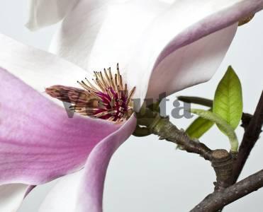 Фотообои, фреска Веточка цветка макросъемка, арт. ID12744