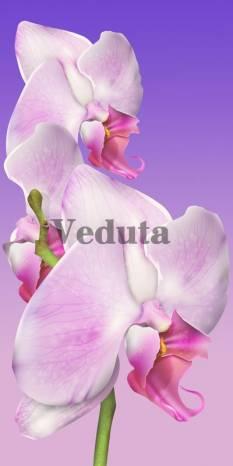 Фотообои, фреска Нежный цветок орхидеи, арт. 7188