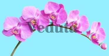 Фотообои, фреска Ветка орхидеи, арт. 7196