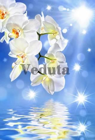 Фотообои, фреска Солнечная орхидея, арт. 7229