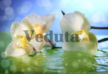 Фотообои, фреска Орхидея в воде, арт. ID11746