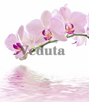 Фотообои, фреска Веточка орхидеи над водой, арт. ID11752