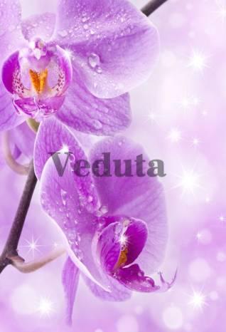 Фотообои, фреска Капли на фиолетовых цветах, арт. ID11759