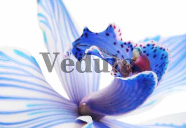 Фотообои, фреска Цветок ириса макросъемка, арт. ID12638