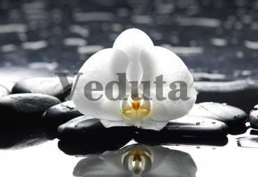 Фотообои, фреска Цветок орхидеи на камнях, арт. ID12710