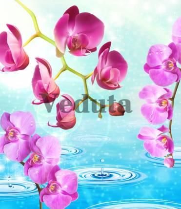 Фотообои, фреска Орхидеи капли воды, арт. ID13227