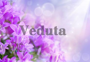 Фотообои, фреска Фиолетовые цветы в лучах, арт. ID11828