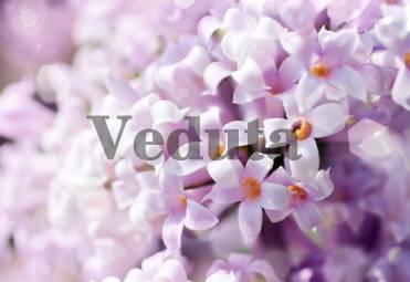 Фотообои, фреска Макросъемка белые цветки, арт. ID11840
