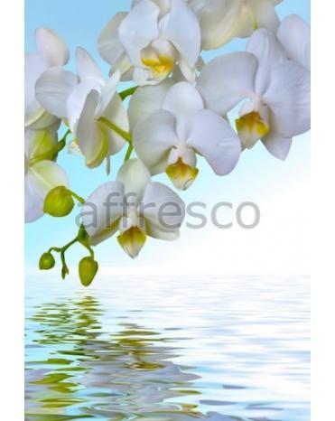 Фотообои, фреска Ветка белой орхидеи над водой, арт. 7225