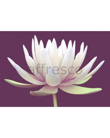 Фотообои, фреска Белый цветок лотоса, арт. 7202