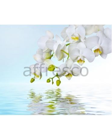 Фотообои, фреска Отражение белой орхидеи, арт. ID12673