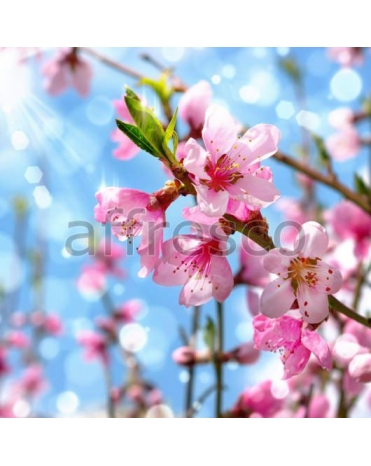 Фотообои, фреска Нежные розовые цветы, арт. 7222