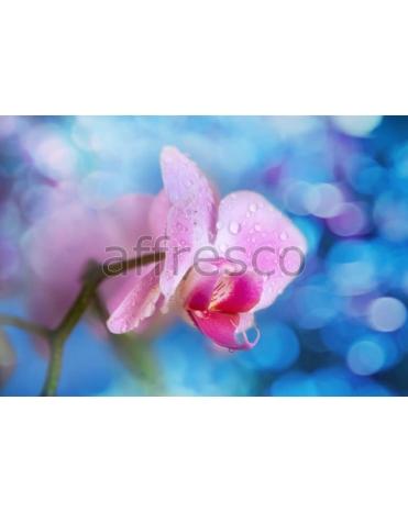 Фотообои, фреска Роса на розовом цветке, арт. ID11747