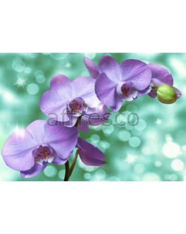 Фотообои, фреска Капля воды на ветке орхидеи, арт. 7213