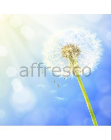 Фотообои, фреска Солнечный одуванчик, арт. ID11703