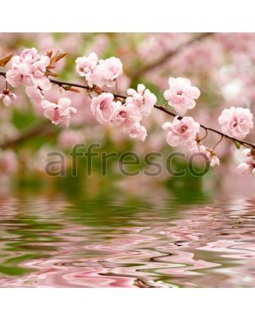 Фотообои, фреска Розовая сакура у воды, арт. ID12656