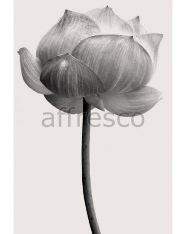 Фотообои, фреска Бутон цветка, арт. ID12813