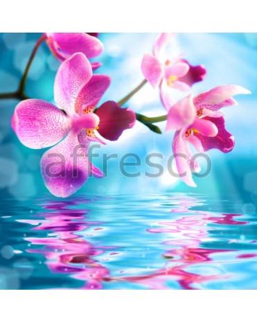 Фотообои, фреска Отражение орхидеи в воде, арт. 7230