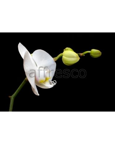 Фотообои, фреска Белый цветок макросъемка, арт. ID12358