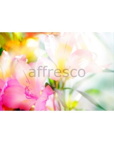 Фотообои, фреска Цветы в солнечных лучах, арт. ID11617