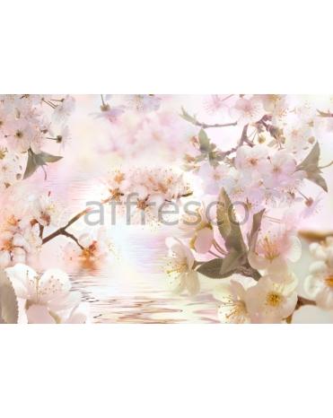 Фотообои, фреска Цветущие ветки сакуры у воды, арт. 7124