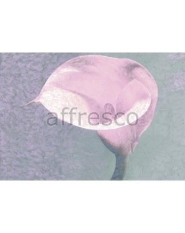 Фотообои, фреска Цветок каллы, арт. ID135578
