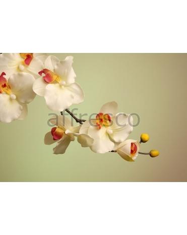 Фотообои, фреска Ветка цветов с бутонами, арт. ID12687