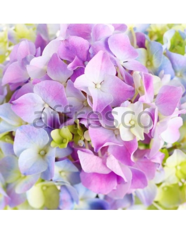 Фотообои, фреска Яркие фиолетовые цветы, арт. ID11657