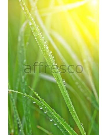 Фотообои, фреска Роса на траве, арт. ID12771