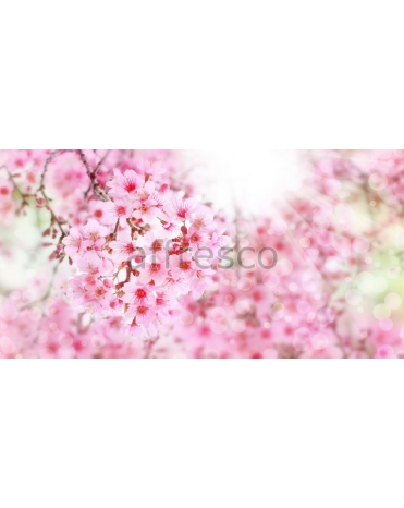 Фотообои, фреска Сакура макросъемка, арт. ID11680