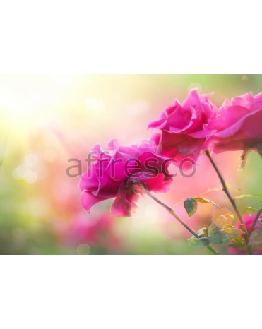 Фотообои, фреска Макросъемка розовые цветы, арт. ID12772