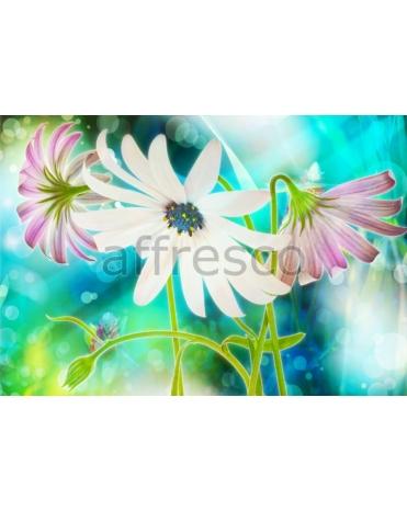 Фотообои, фреска Нежные полевые цветы, арт. ID13323