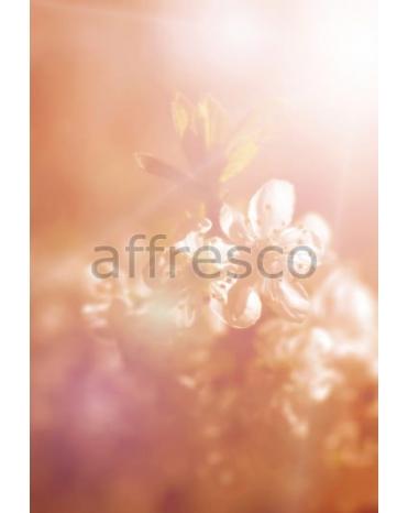 Фотообои, фреска Сакура в лучах солнца, арт. ID11810