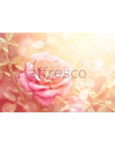 Фотообои, фреска Розовый цветок, арт. ID11723