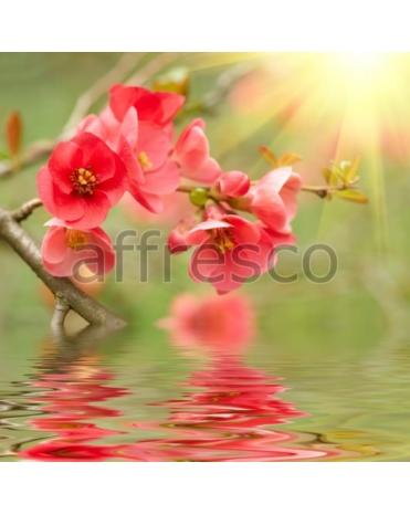 Фотообои, фреска Отражение цветущей ветки, арт. ID12655