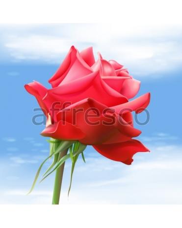 Фотообои, фреска Лепестки розы, арт. ID13229